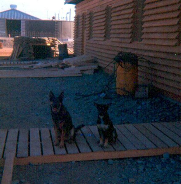 Our Pets In Front Of The Guard Quarters