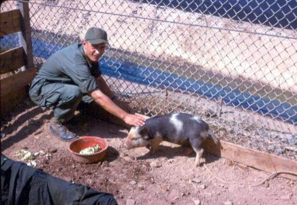 The Pet Pig Were Near The Mess Hall Area At Newport